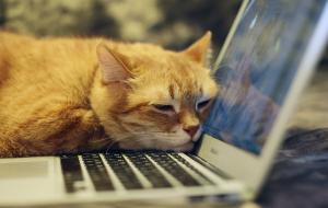 Essential Keyboard Shortcuts for Mac Users